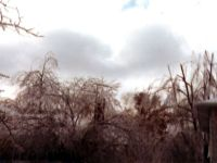 January 15, 1978 Ice Storm - Syosset, New York.  The storm sheared the tops off of many trees.